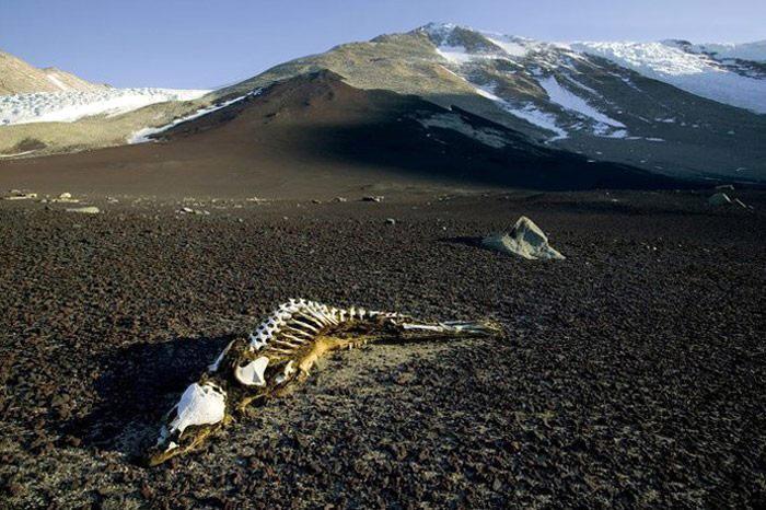 028-Antarktis