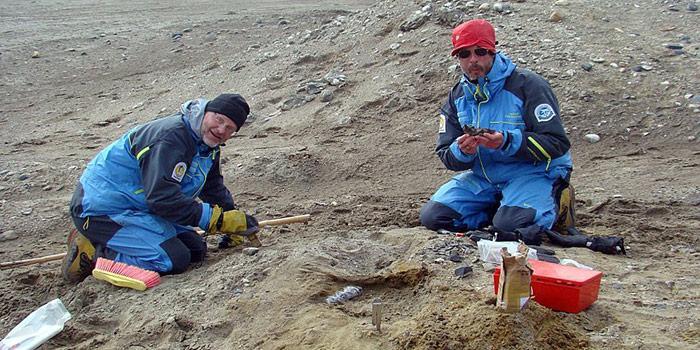 Basilosauridae Fund