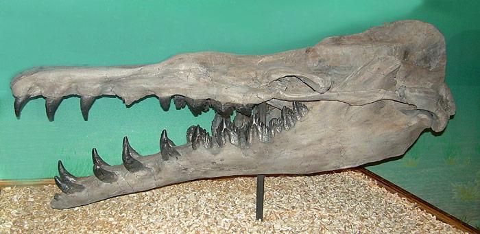 Basilosauridae Kiefer