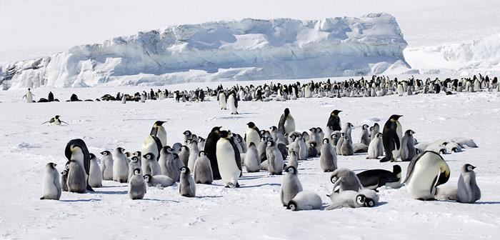 Snow Hill ist die nördlichste bekannte Kaiserpinguin-Kolonie und liegt in der Weddell Sea, auf der Ostseite der Antarktischen Halbinsel.