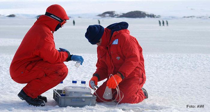 Auch das AWI ist an der Suche nach Ikait Dr. Gerhard Dieckmann und seine wissenschaftliche Hilfskraft Michael Fischer bei der Meereisprobennahme.