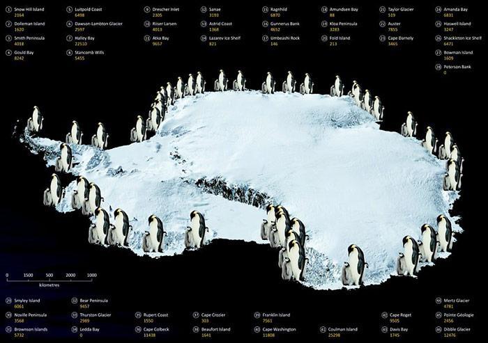 Bis heute sind in der Antarktis knapp 50 Kaiserpinguin-Kolonien bekannt.