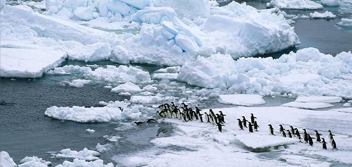 Die Adeliepinguine fühlen sich wohl im Eis, wie hier in der Ross Sea vor dem Cap Adare.