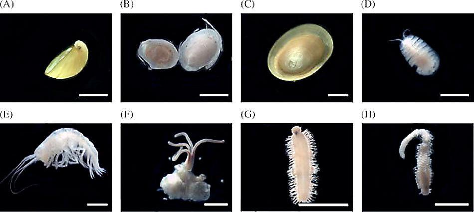 Bei der Entdeckung der Walknochen bei den South Sandwich Inseln wurden auch neue Arten von Tiefseeorganismen gefunden.