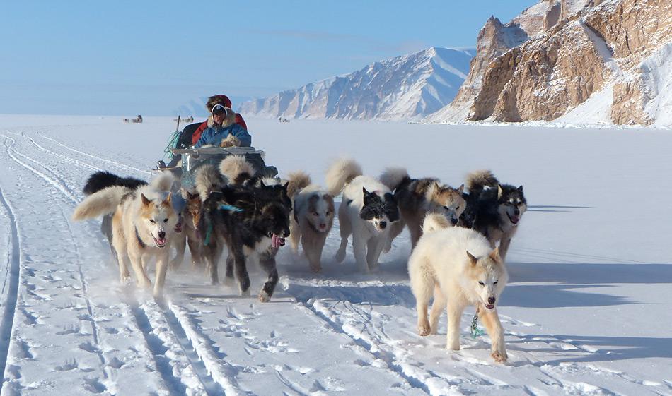 Schlittenhunde waren bis anhin ein zuverlässiger Partner der Inuit auf der Jagd, heute wird er zusehends durch Schneemobile konkurrenziert.