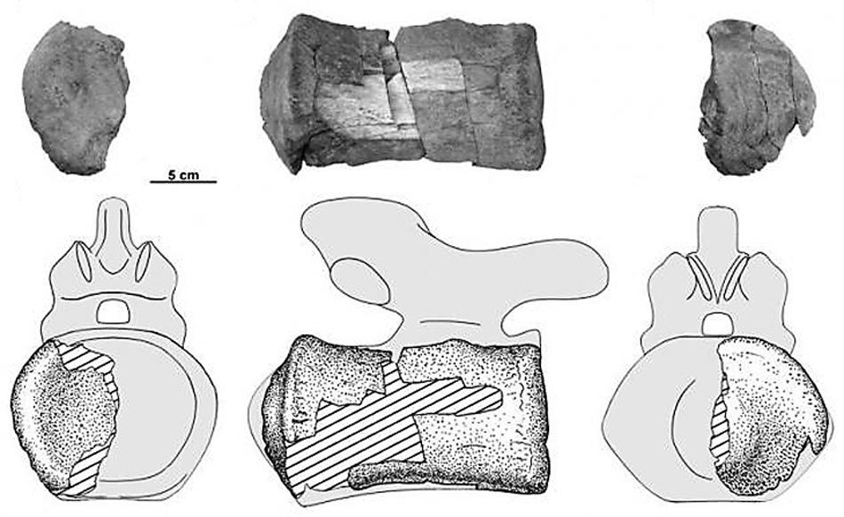 Nach mehreren Millionen Jahre im Erdreich konnten guterhaltene Knochenfunde gefunden und zugeordnet werden.