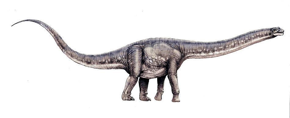 Die Titanosaurier sind mit über 30 bekannten Gattungen die geographisch am weitesten verbreitete und verschiedenartigste Sauropodengruppe.