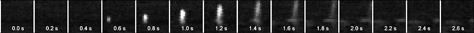 Diese Bildsequenz zeigt das Aufsteigen und Versiegen eines Walblases, wie es die Wärmebildkamera am Krähennest des deutschen Polarforschungsschiffes «Polarstern» aufzeichnet. Sequenz: Daniel Zitterbart, AWI