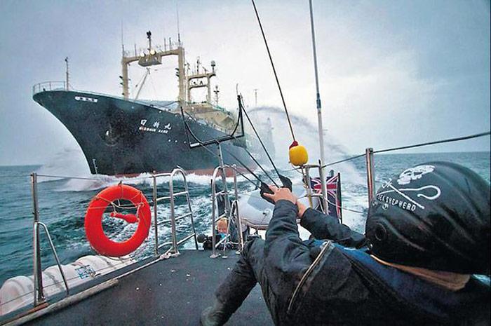 Sea-Shepherd-Aktivist
