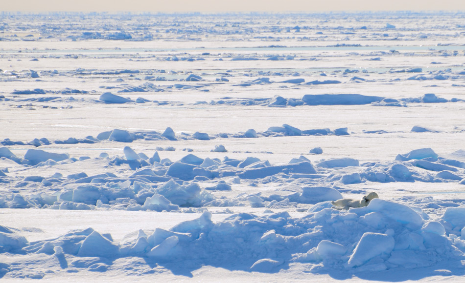 Die Fläche des arktischen Meereises ist in den vergangenen 10 Jahren immer kleiner geworden, trotz Erwärmungspause. Doch trotzdem haben viele Klimaskeptiker dieser Pause als Beweis für die Nichtexistenz des Klimawandels genommen. Bild: Michael Wenger