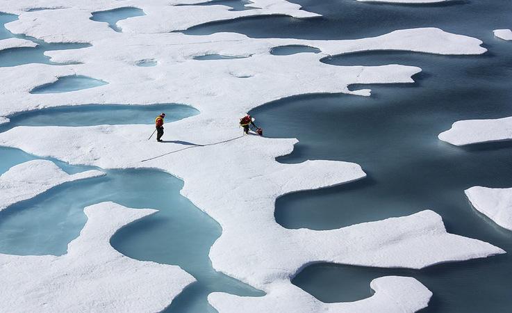 Algen wachsen unter dem Meereis in der Arktis. Bisher wurde angenommen, dass sie erst im Frühjahr
