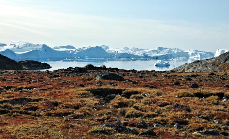 Grosse Gebiete der arktischen Tundra wie in Grönland sind sehr pflanzenreich. Hier leben auch