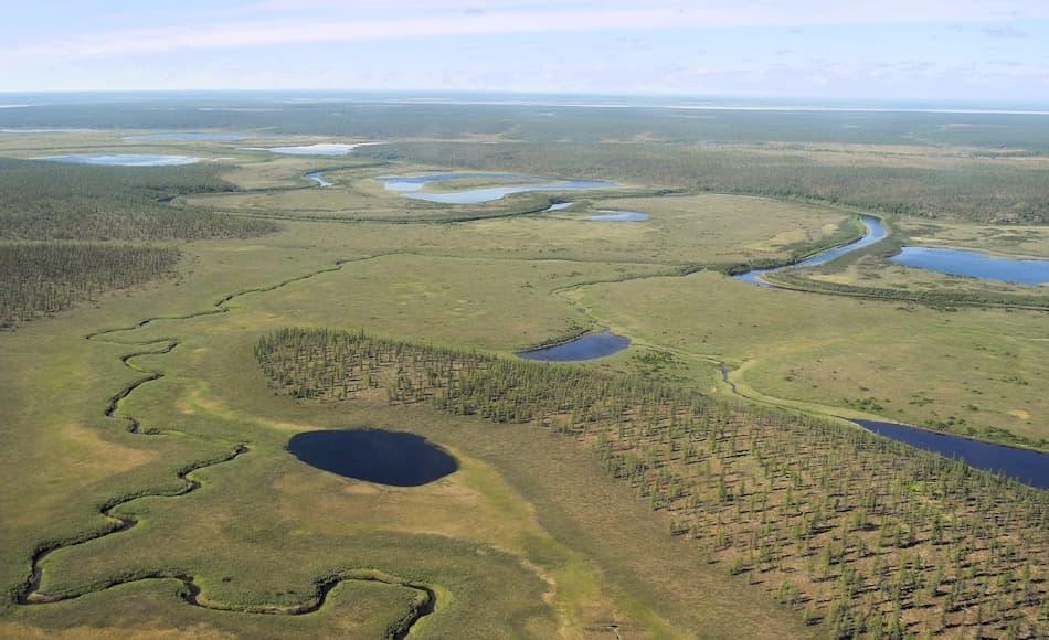 Die sibirische Taiga, die weite Teile des hohen Nordens Russlands ausmacht, ist von Lärchenwäldern bedeckt. Zwischen Seen und Sümpfen haben sich die Lärchen ausgebreitet und dominieren das arktische Ökosystem. Bild: Stefan Kruse, AWI