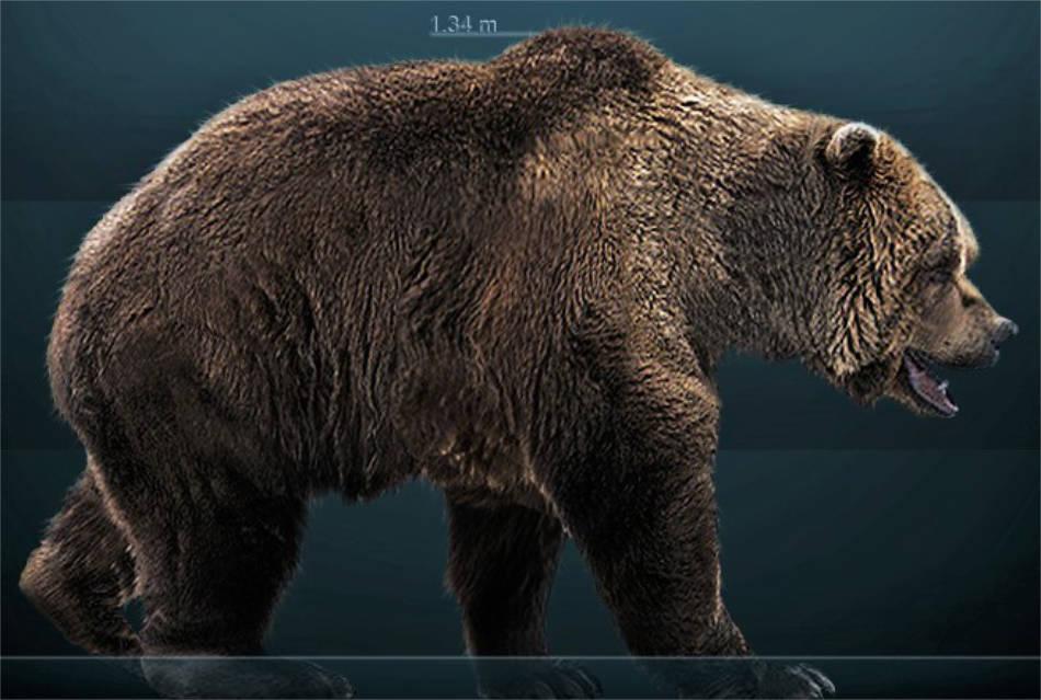 Noch massiver als ein Grizzlybär: so ähnlich sah ein Höhlenbär aus. Seine Kopf-Rumpf-Länge betrug bis zu 3,5m, seine Schulterhöhe zirka 1,70m. (Bild: Sergio Dlarosa / Wikicommons CC BY-SA 3.0)
