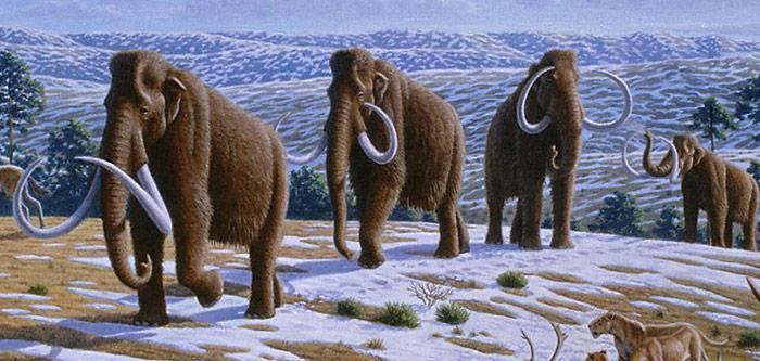 Mammut-Herde
