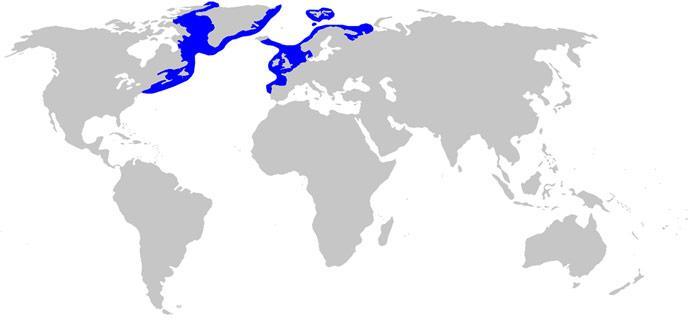 Das Verbreitungsgebiet des Grönlandhais sind die arktischen Gewässer des Nordatlantiks. Gelegentlich wird er auch weiter südlich, bis in die Biskaya, angetroffen. Er kann bis mehrere tausend Meter tief tauchen.