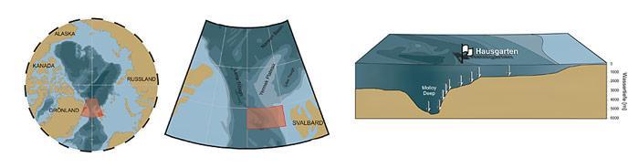 Die Tiefsee-Forscher am AWI untersuchen das Gebiet zwischen Spitzbergen und Grönland seit 1999. Der «HAUSGARTEN» besteht aus 16 Stationen die Wassertiefen von 1000 bis 5500 m umfassen. An diesen Stationen werden alljährlich in den Sommermonaten Probennahmen durchgeführt.