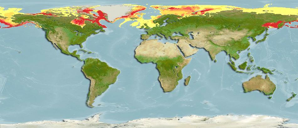 Der Polardorsch ist in den kalten Gewässern des arktischen Polarmeeres zu Hause. Diese Art ist zirkumpolar verbreitet, d. h. sie bewohnt den Nordatlantik ebenso wie den Nordpazifik.