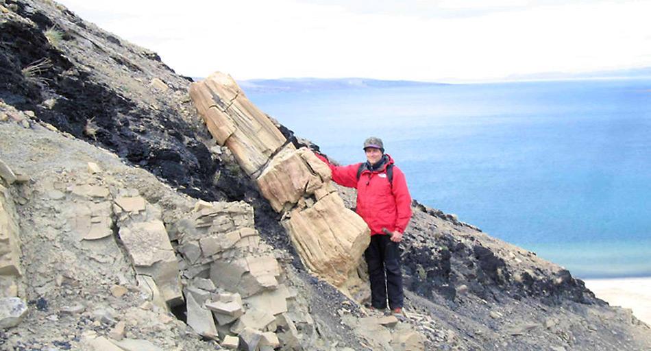 Vor 55 Millionen Jahre bedeckten Wälder die Kanadische Arktis und den Norden Grönlands. Versteinerte Überbleibsel zeugen noch heute davon.