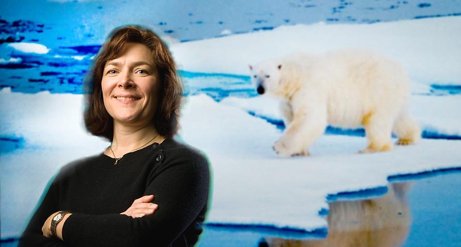 Die Professorin Charlotte Lindqvist hatte bereits früher genetische Unterschiede zwischen Eis- und Braunbären entdeckt.
