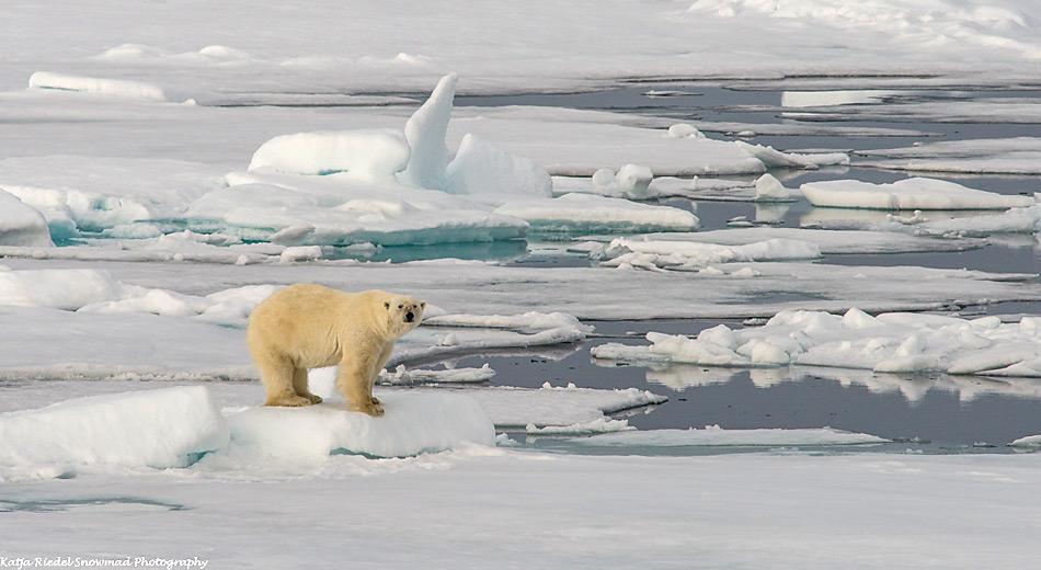 Mikroplastikpartikel sammeln sich in arktischen Gewässern an. Sie können von Fischen und anderen Meerestieren aufgenommen werden und gelangen damit in die arktische Nahrungskette. (Foto: Katja Riedel)