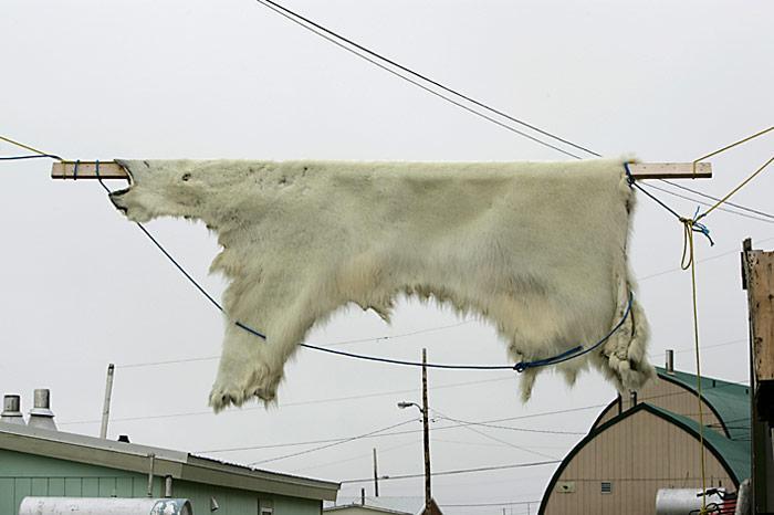 Eisbaerenfell