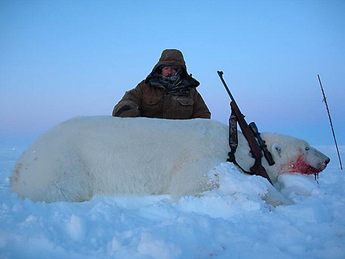 geschossener-Eisbaer