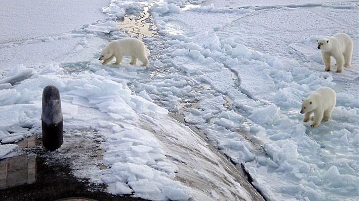 Nicht schlecht staunten die drei Eisbären als sie auf ein aufgetauchtes U-Boot trafen.