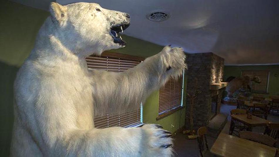Naturschützer befürchten dass die Sammelwut der Chinesen dem Eisbären-Bestand nicht zugut kommt.