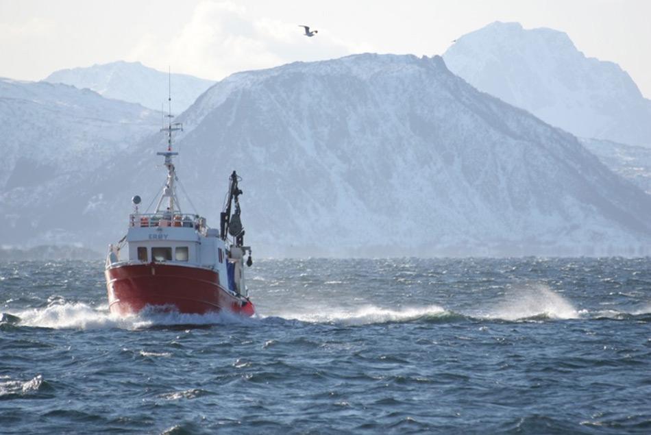 Bisher war Fischerei in der Arktis vor allem auf Küstengebiete beschränkt. Nährstoffreiches Wasser entlang der Küste machte das Fischen für Kleine Fangschiffe lukrativ. Doch mit der steigenden globalen Nachfrage nach Fisch, mussten neue Fanggebiete auf dem offenen Meer ausgebeutet werden. Bild: NOFIMA