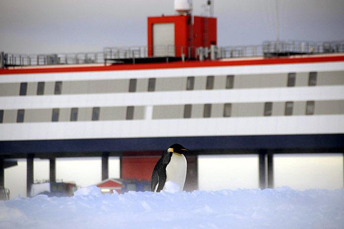 Pinguin-Neumayer