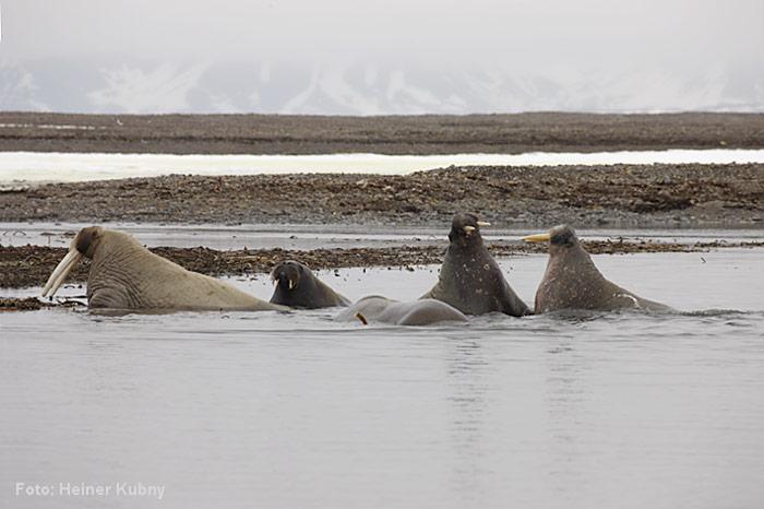 Spitzbergen-017