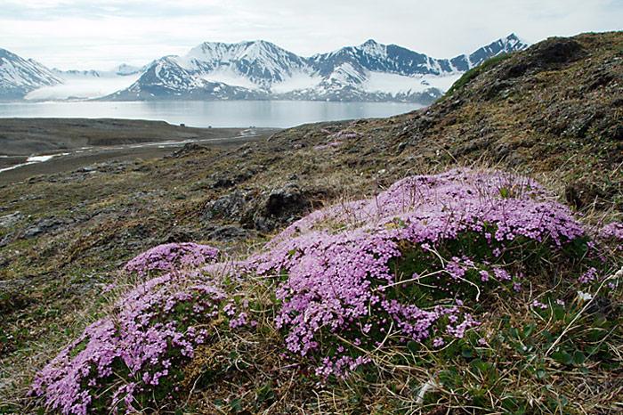 028_spitzbergen_2010