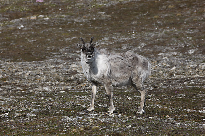 031_spitzbergen_2010